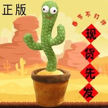 New Gift! Dancing Enchanting Cactus Twisting Music Song