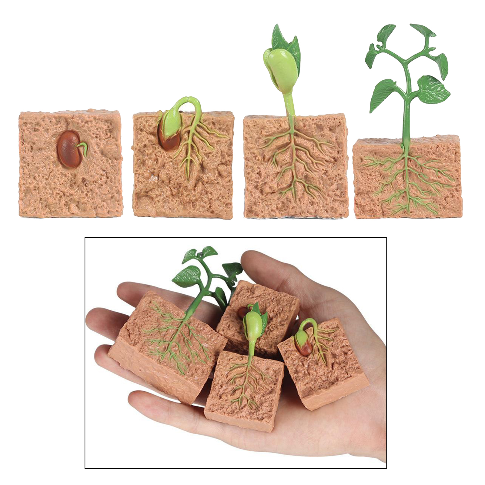 Kids Plant Seeds Growth Life Cycle Playset Cognitive Toys Teaching Aids 1