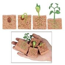 Crianças plantam sementes crescimento ciclo de vida playset brinquedos cognitivos auxiliares de ensino