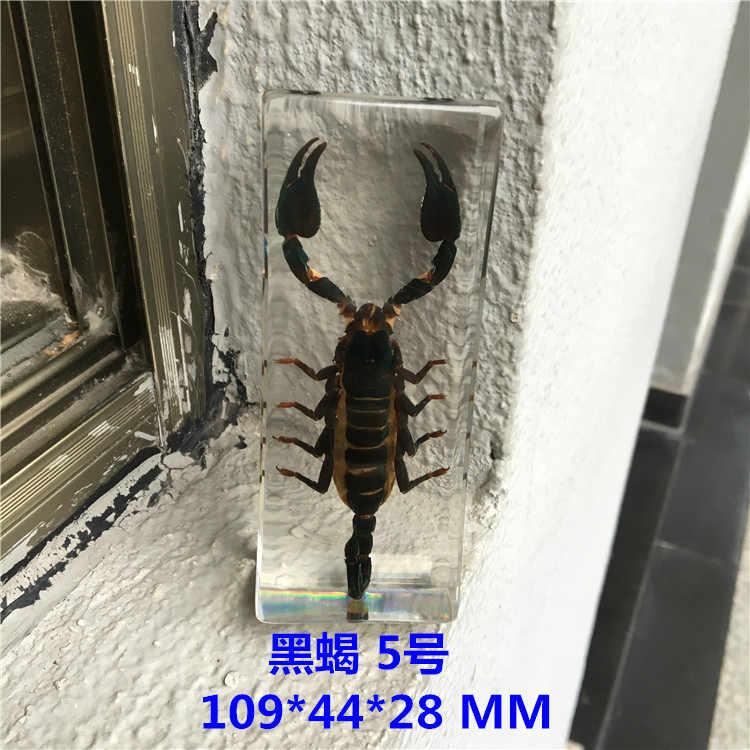 樹脂昆虫標本手芸ムカデスパイダークカブトムシサソリ生物サンプル少年ギフト