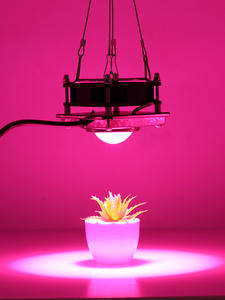 Full Spectrum COB Grow Light 300W High Luminous Efficiency Growing Lamp for Plants COB