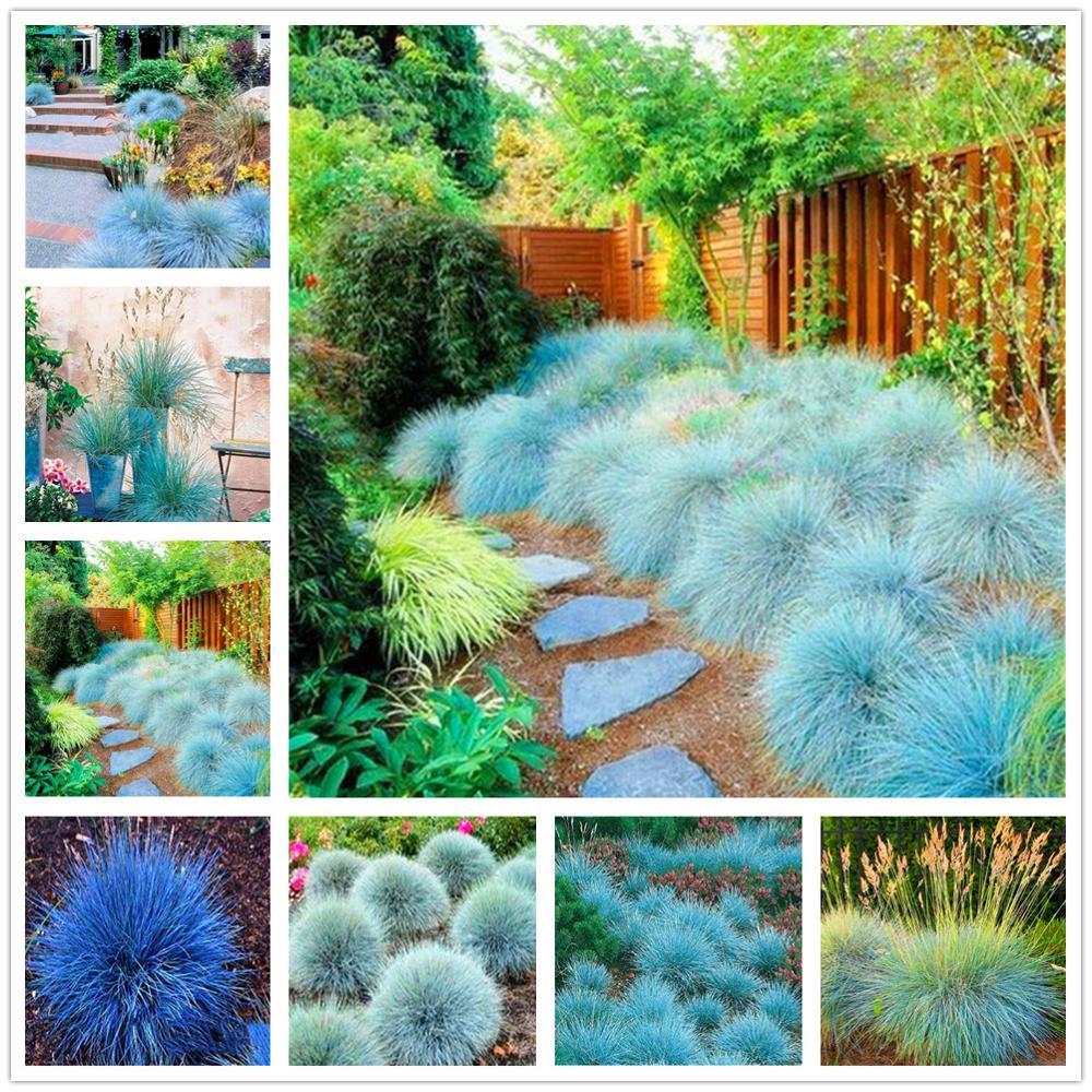 Plant Flower Bath Salts Blue Fescue Grass Essence 300Pcs XZZ-211