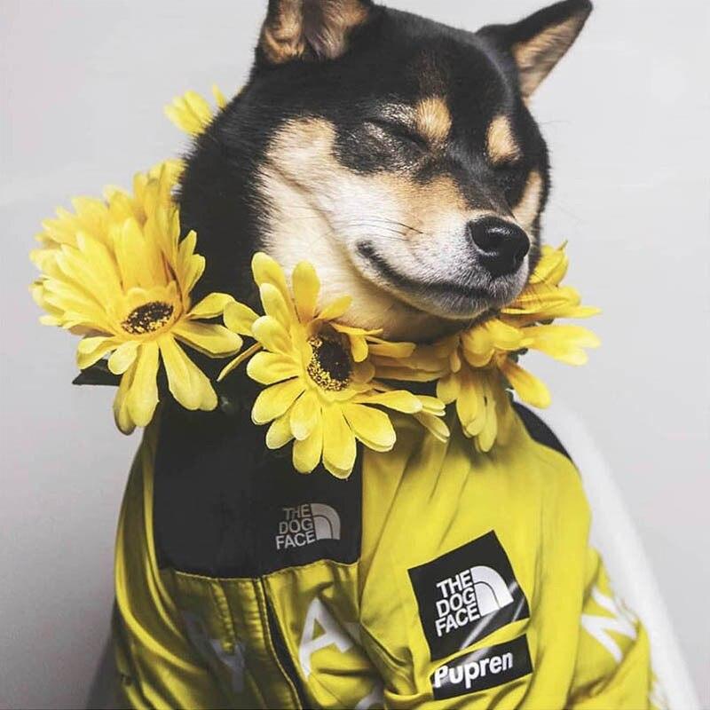 الكلب الملابس الشتوية يندبروف الكلب سترة موضة ملابس الحيوانات الأليفة ل كلاب متوسطة وكبيرة الحجم لابرادور عاكسة الكلاب الملابس Ropa Perro