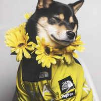 Hund Winter Kleidung Winddicht Hund Jacke Mode Haustier Kleidung für Medium Large Hunde Labrador Reflektierende Hunde Kleidung Ropa Perro