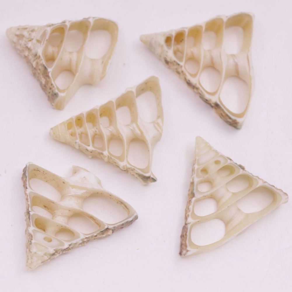 Купить с кэшбэком 5 PCS 30mm-35mm Conch Shell Natural White Mother of Pearl Jewelry Making DIY