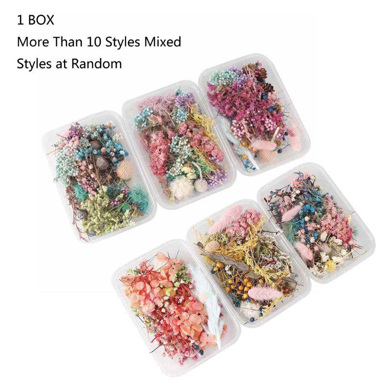 Натуральный прессованный цветок, листок, сушеный цветок ромашки, смола, цветок, сухая красота, наклейки для дизайна ногтей, эпоксидная форма...