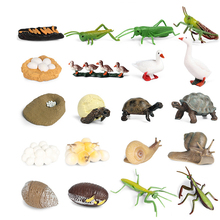 Models Growing Process Enlightenment Toys Furnishings Children's Gifts Wild Animals Knowledge Science,Home Entertainment