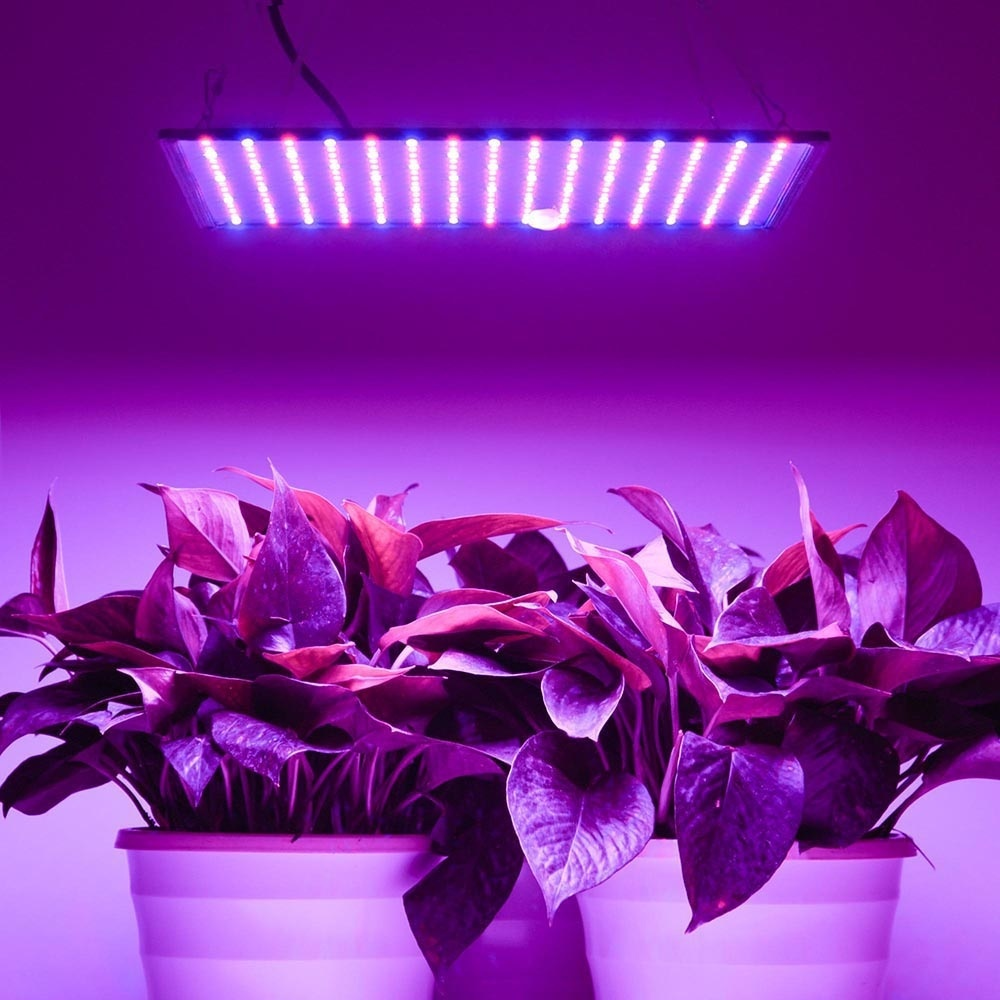 Image 5 - 1000W LED Grow Light Full Spectrum Phyto Lamp Led Lights For Indoor Growing Plant Lamp Lights For Plant Grow Tent Led FitolampyLED Grow Lights   -