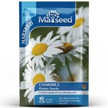 American Heirloom MARSEED Chamomile Flower  Seedsplants Seedling Garden Outdoor