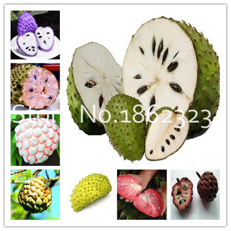 20 Pcs Soursop Bonsai Fruit, Graviola Annona Muricata Sweetsop Delicious Fruit Bonsai Sugar Apple Annona Tree Plant In Bonsai