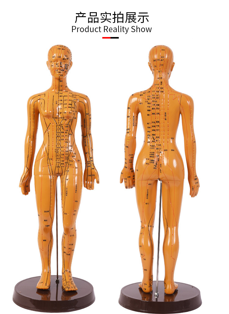Traditional Chinese Medicine Teaching Acupuncture Acupoint Mannequin Men And Women Meridian Small Bronze Massage Hand Ear Head A