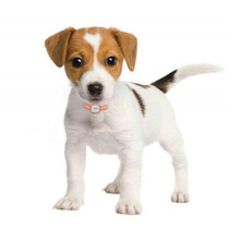 tk911 nice mini dog gps tracker cat pet gps locator waterproof 400 hours standby dog finder support free web ios android app Mini Pet GPS Tracker Cat Dog 2160 Hours Standby GSM GPRS Tracking Locator With SOS Alarm System Tracking Device Waterproof