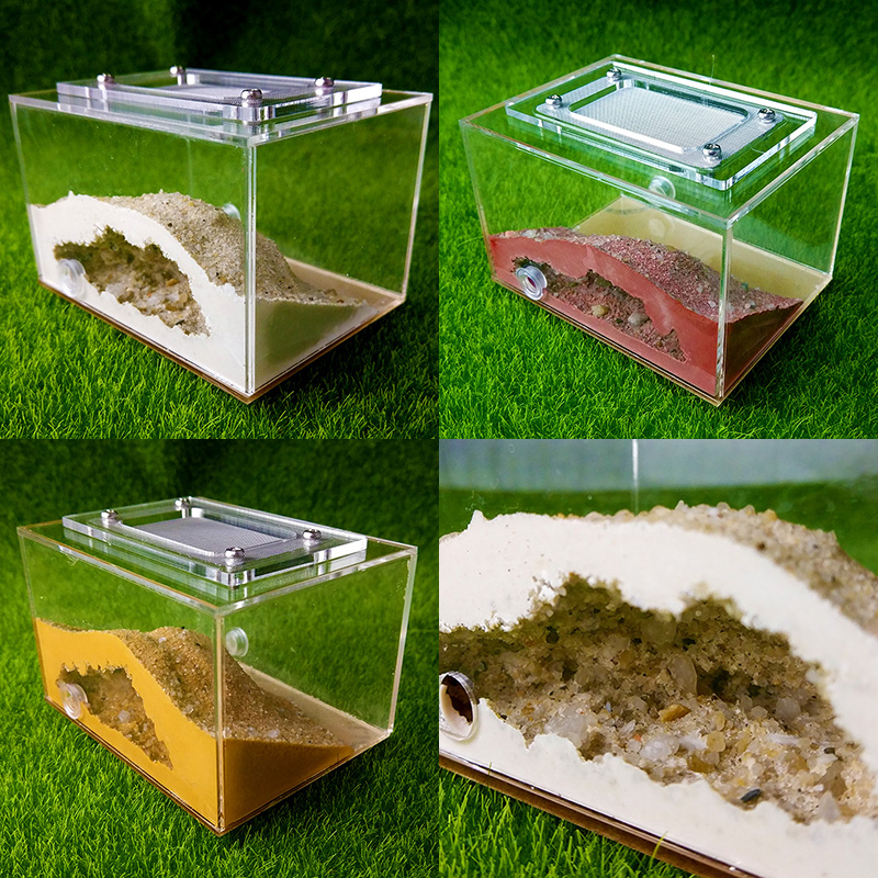 [Ants Dealer] Professional Dsigned Ants Farm Ants Nest  Formicarium For Young Queens Or Small Cononies Messor & Camponotus