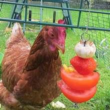 Курица Еда овощи фрукты висячая кормушка игрушка Нержавеющаясталь