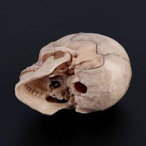 Image 5 - 15 ชิ้น/เซ็ต 4D ถอดสีกะโหลกกายวิภาครุ่นที่ถอดออกได้การสอนการแพทย์เครื่องมือ