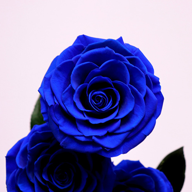 Вечные цветы сушеные цветы сохраненные свежие цветы живая Роза стеклянный купол подарочная коробка синий - 5