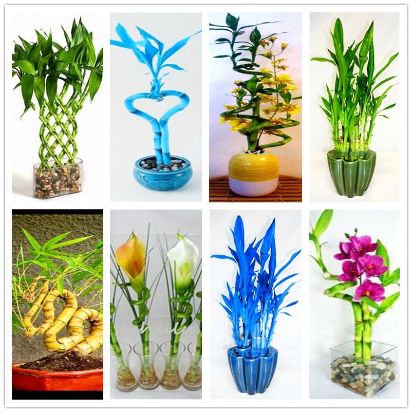 Plant Flower Bath Salts Lucky Bamboo Essence 100Pcs XZZ-300