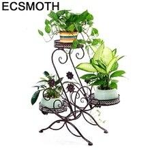 Piante décorative fer plante