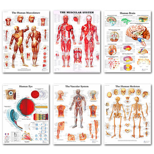 Human Anatomy Muscles System Art Poster Print Body Map Silk Painting Wall Pictures for Medical Education Office Home Decor(China)