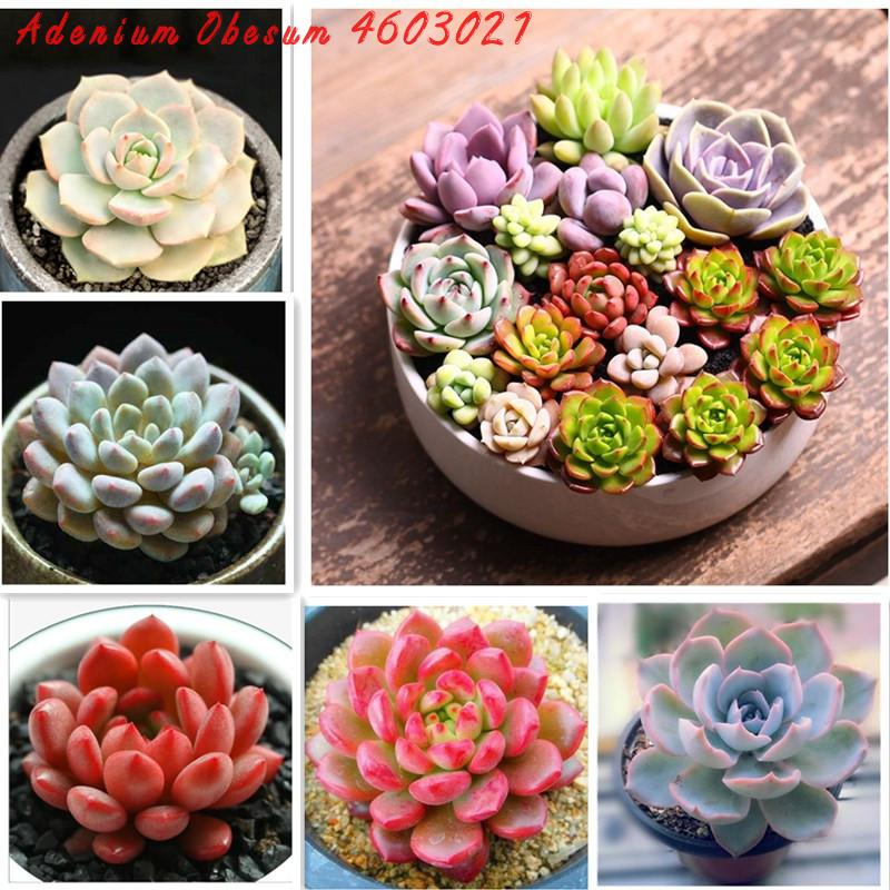 Spring Selling Bonsai 100 Rare Mix Succulent Cacti Bonsai Plant Bonsai Plant For Balcony Garden Flower Plants Easy To Plant