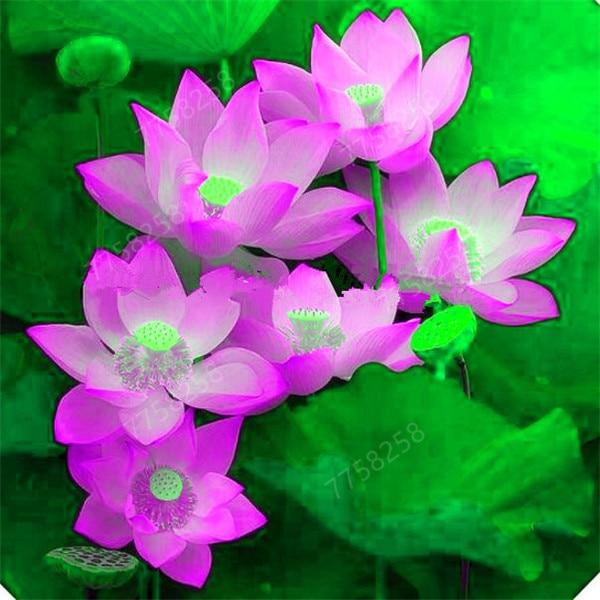 100Pcs Bowl Lotus Water Lily Flower Bathing Salt for Home Garden Flower Fragrance Bath Salts 5