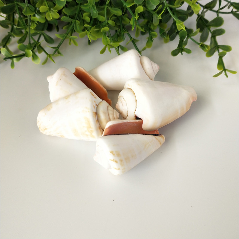 5PCS Party Festival Home Decor Aquarium Decoration Conch Shells Natural Sea Beach Shell Conch Seashells For DIY Crafts Red Conch