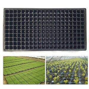 200 Cell Seedling Starter Tray