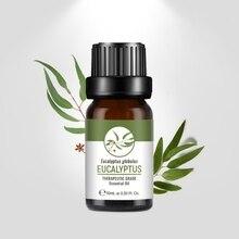 Natural Essential Oils Pure eucalyptus bio oil