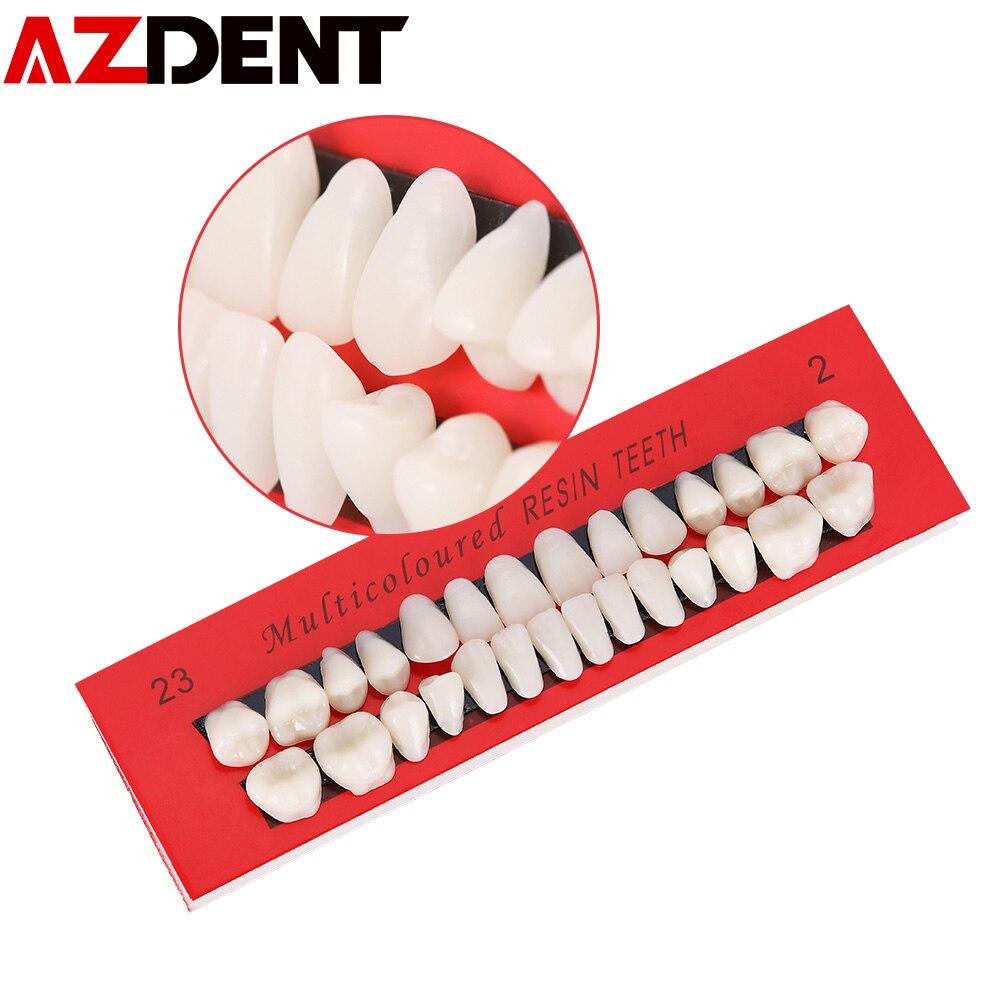 10 Set Dental Teeth Model Adult Permanent Dentist Tooth Anatomical Anatomy Model Full Month Dental Communication Tooth Models