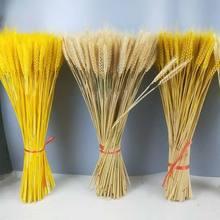 10/20/50 real trigo orelha flor decoração natural pampas coelho grama flores para festa de casamento diy artesanato