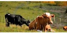 1 pcs נירוסטה מזין עבור הבקר חוות כבשים בעלי חיים כלים אנא קשר מוכר