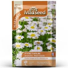 American Heirloom MARSEED Pyrethrum Flower  Seedsplants Seedling Garden Outdoor