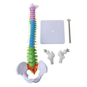 Image 2 - 45cm נשלף אדם עמוד השדרה דגם עמוד השדרה בחוליות המותני עקומת אנטומיים רפואי הוראת כלי