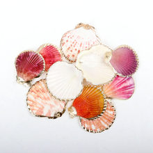 Natural Sector Shell Gold Plated SeaShells for DIY handmade Home decoration jewelry making 5pcs