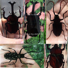 Explore-Instrument Insect Specimen Resin Teaching-Supplies Educational School Clear 110x43x26mm