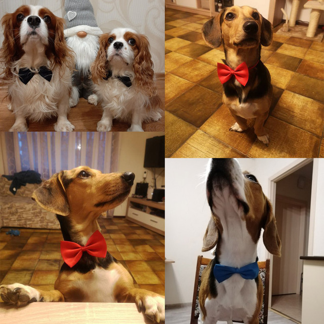 Colorful Bowtie for Dogs & Cats  3
