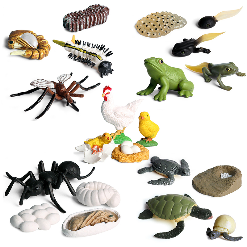 Simulation Insects Animals Frog Cock Growth Cycle Series Set 5 Style Mini Size Turtle Ant Model Action Figures Toy For Kids Gift