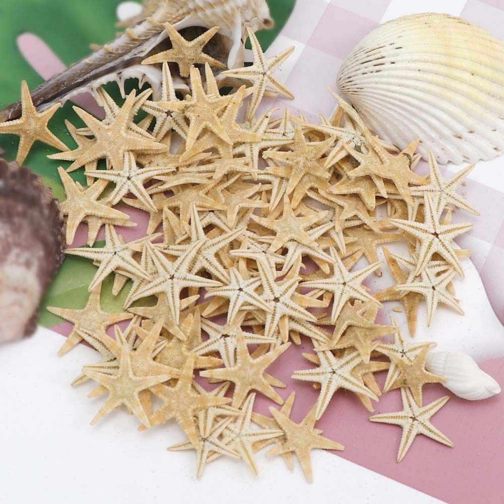 1 caixa natural starfish seashell praia artesanato natural mar estrelas diy praia decoração de casamento artesanato decoração para casa epóxi 1-5cm