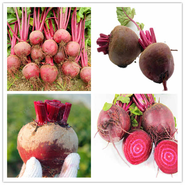 100 Pcs Juicy Beets Outdoor Boltardy Beetroot Organic Vegetable