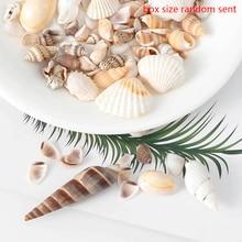 Wall-Decoration Conch-Shells Aquarium Seashells-Crafts/party-Decor Landscape Natural