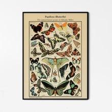 História natural cartaz do vintage borboleta pintura em tela adolphe millot impressão borboleta ilustração da parede arte decoração para casa