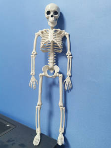 Skeleton-Model-Anatomy Learning Party-Decoration Sketch Halloween Medical Human Active