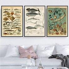 Плакатный принт Ретро морская Морская раковина рыбка животное винтажная схема жизни биология Живопись Художественная стена картины для гостиной домашний декор