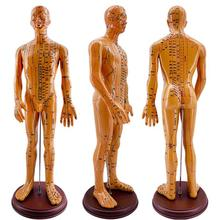 60CM Male Lettering acupuncture point body mannequin of acupuncture, Medical Research massage reflex zone teaching model C518