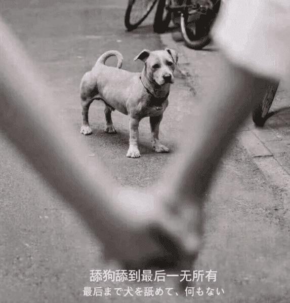 """关于最近圈子很火的""""舔狗日记""""解说"""