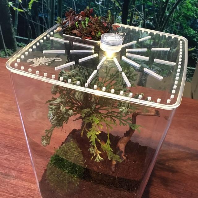 Transparent Reptile Box 5