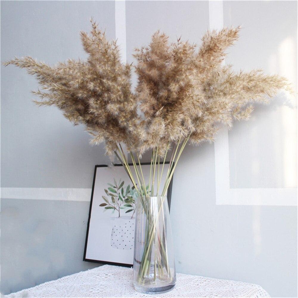 Corta Dried Pampas Flower