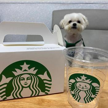 Déguisement Starbucks