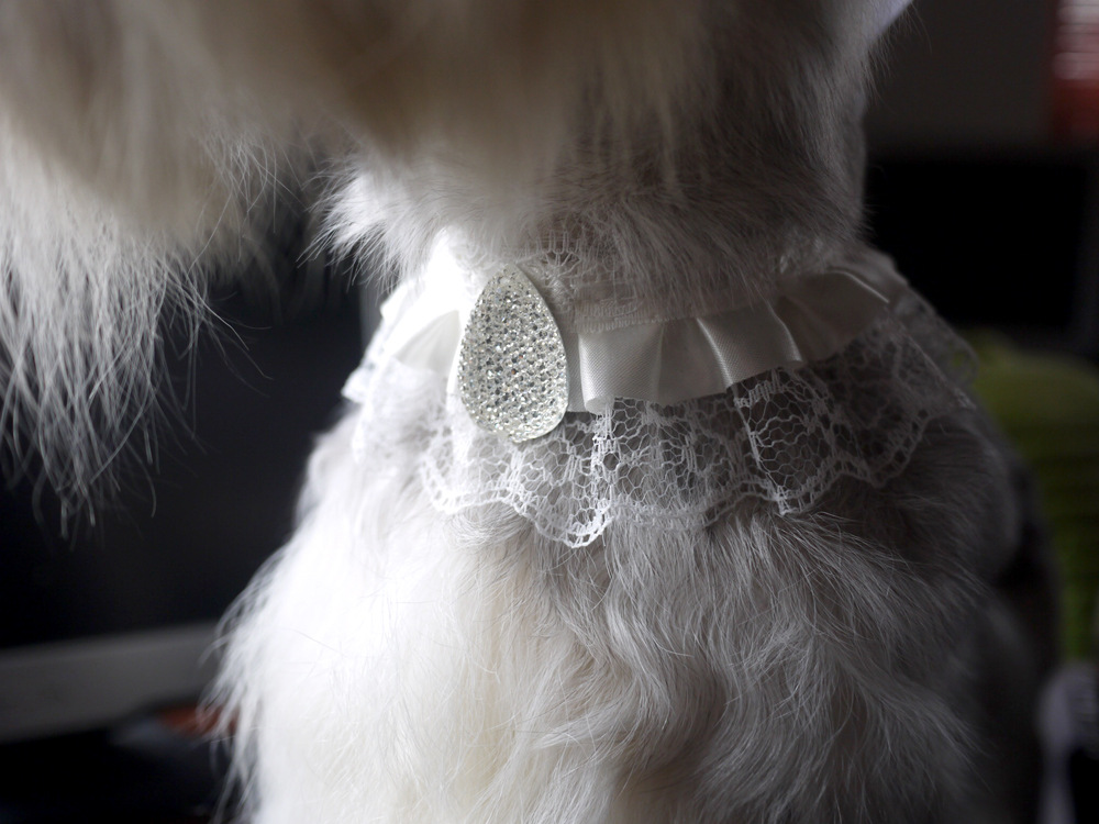 Buffy Chong Jia Pet Clothes Supplies Dog Neck Ring Pet Necklace Lace Neck Ring