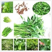 100Pcs Lettuce Sauerkraut Seeds Bonsai Garden Nature Water Spinach Plants Home Romaine Lettuce Vegetables Essence Lip Mask SC8
